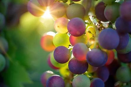 L'eccellenza dei vini slovacchi